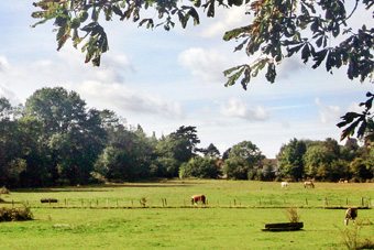 The Woodcote Estate